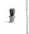 Cactus in pots on white 47941073