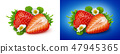 Strawberry isolated. Two strawberries with flowers and leaves isolated on white background 47945365