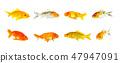 Goldfish and koi fish and bubble eye goldfish. 47947091