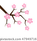 spring cherry blooming flowers pink petals isolated on a white background 47949716