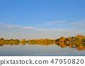 Rio Paraguay River between Corumba and Porto Jofre, Pantanal landscape, Mato Grosso do Sul, Brazil 47950820