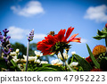 Summer flowers and one bee in front of blue sky 47952223
