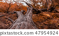 Ruined trees in the aftermath of Lilac Fire 47954924