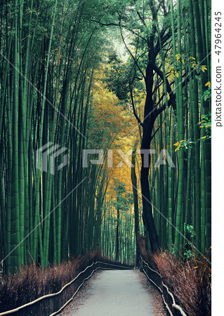 Bamboo Grove 47964245