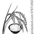 Inaho和煮熟的米飯墨水畫單調 47971092