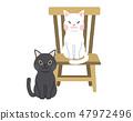 고양이 세트 47972496
