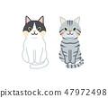 貓設置 47972498
