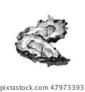 牡蛎牡蛎墨水画单调 47973393