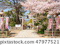 春天弓弦羽毛神社 47977521