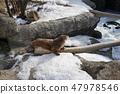 冬季動物公園水獺角落 47978546