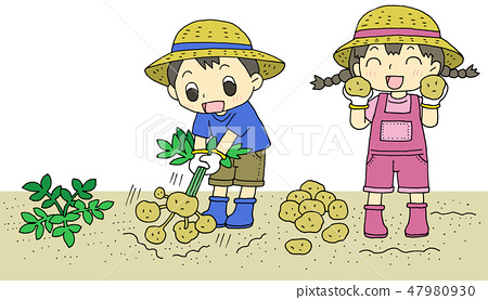 馬鈴薯收穫兒童 47980930