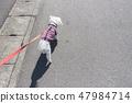 개를 산책 47984714