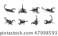 Group of scorpion on white background. Insect. 47998593