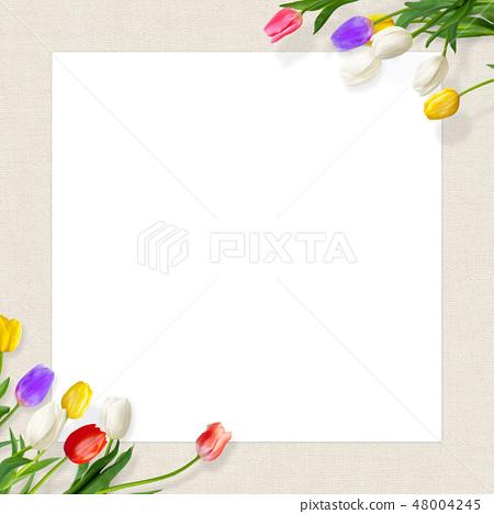 Background - Flower - Azabu - Spring - Tulip - Frame - White Back 48004245