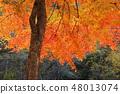 ใบไม้ร่วง 48013074
