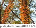ต้นไม้สี 48013324