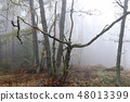 Autumn forest in fog 48013399