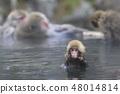 지고 쿠 다니 야생 원숭이 공 원의 스노우 몽키 48014814