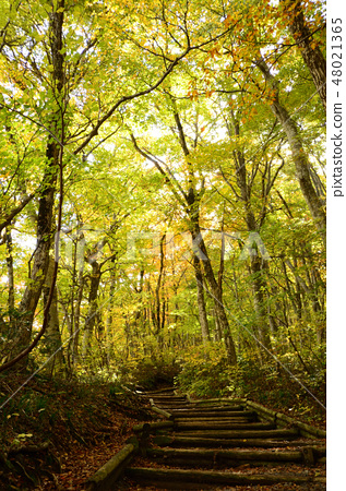 Autumn leaves of Oyama 48021365