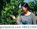 asian woman inspecting grapes in vineyard 48022366