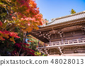 (Tokyo) The Takao Yakuin which autumn leaves turned 48028013