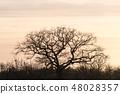 Wide oak tree silhouette 48028357