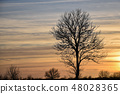 Big bare tree silhouette by sunset 48028365