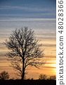 Lone tree silhouette by twilight 48028366