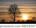 Bare tree silhouette 48028367