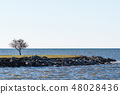 Lone tree by the coast 48028436