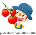 農業工作(番茄果實) 48028488