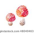 빨간 버섯 - 베니텐구다케 48040463