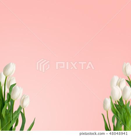 봄 - 배경 - 핑크 - 튤립 - 흰색 48048941