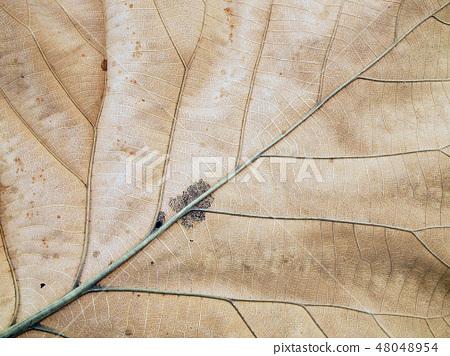 Patterns on the leaves shriveled 48048954
