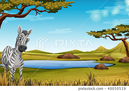 Zebra in the forest 48050519