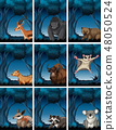 Set of  exotic animal in wild forest 48050524
