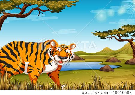 A tiger in nature scene 48050688