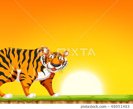 A tiger on sunset background 48051483