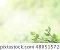 新鮮的綠色 - 葉子 - 綠色 - 背光 - 早晨露水 - 刷新 48051572