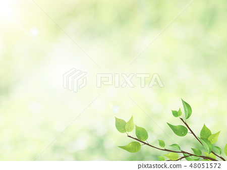 신록 - 잎 - 그린 - 역광 - 아침 이슬 - 상쾌한 48051572