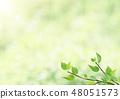 Fresh green - leaves - green - backlight - refreshing 48051573