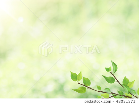 新鮮的綠色 - 葉子 - 綠色 - 背光 - 清爽 48051573