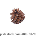 pine cone isolated on white background 48052029