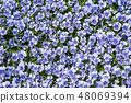 봄의 빛과 비올라 꽃 48069394
