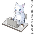 使用個人計算機的貓 48075598