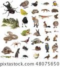 european wildlife in studio 48075650