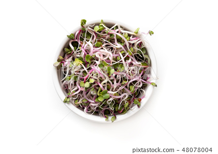 Pink radish sprouts in a bowl on white background 48078004