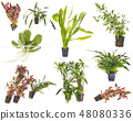 aquarium plants in studio 48080336