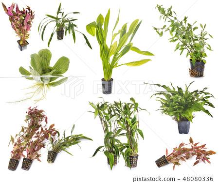 aquarium plants in studio 48080336