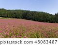 Red Soba no Sato / Minowa-cho Nagano Prefecture 48083487